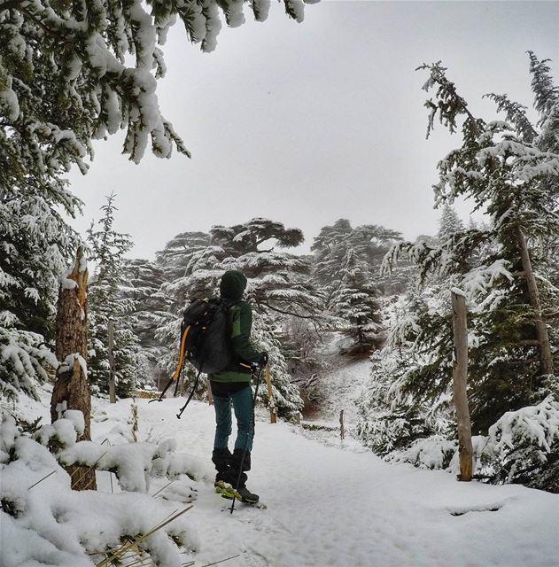 Snow Falling on Cedars. 🌲❄ backpacking  snow  thenorthface  mikesport ... (Cedars of God)