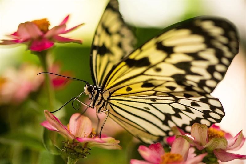A spring Message... shot in  butterfly  garden  uae  photography  macro ...