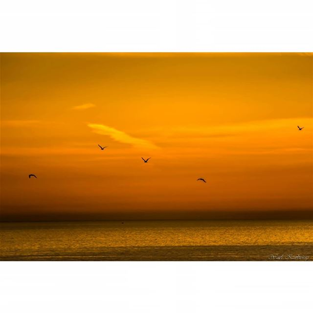 sunset  sea  seascape  birds  flying  beach  sky  water  landscape ...