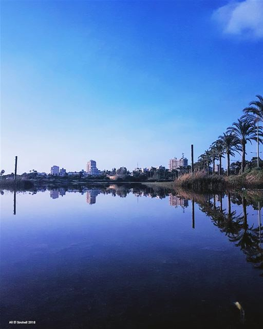 tyre  southlebanon  water  reflection  winter  palm  trees  city  sky ... (Tyre, Lebanon)