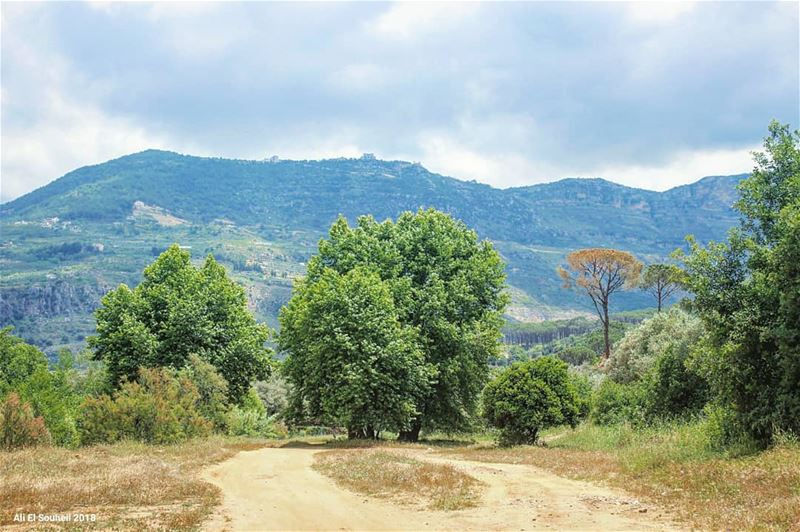 tb  besri  valley  trees  nature  sky  lebanon  colorful  livelovelebanon... (Besri, Chouf)