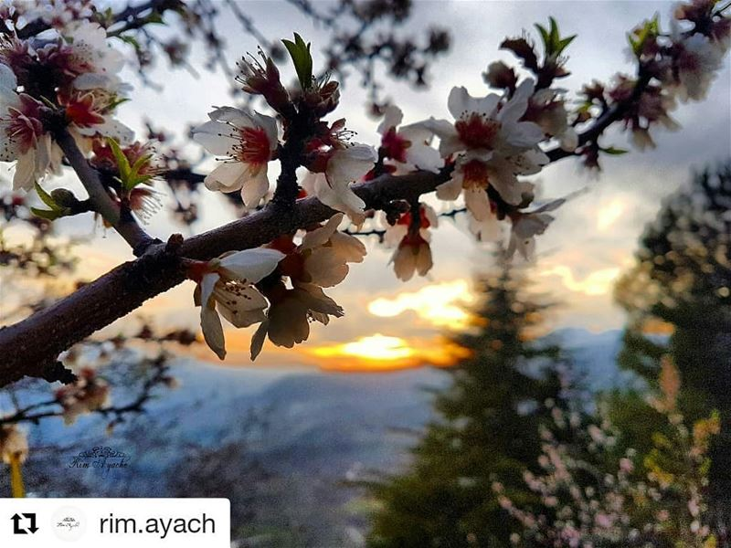 livehasbayalove Repost @rim.ayach ・・・I can smell Spring in the Air 😍💐... (Akoura, Mont-Liban, Lebanon)
