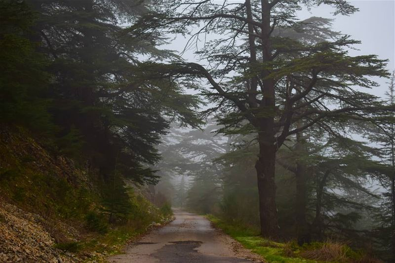 Go fast enough to get there but slow enough to see🌲 landscape ... (Aïn Zhalta, Mont-Liban, Lebanon)