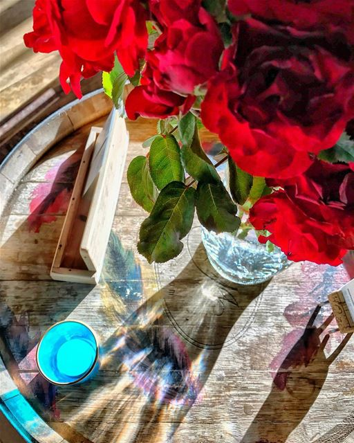 flowers  sunlight  shadow  photography  photooftheday  picoftheday ...