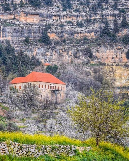 Our Lord has written the promise of resurrection, not in books alone, but... (Ehden, Lebanon)