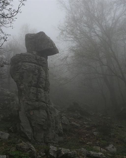 Hiking in the wet foggy forestand in the middle of the fog... this... (Ehmej, Mont-Liban, Lebanon)