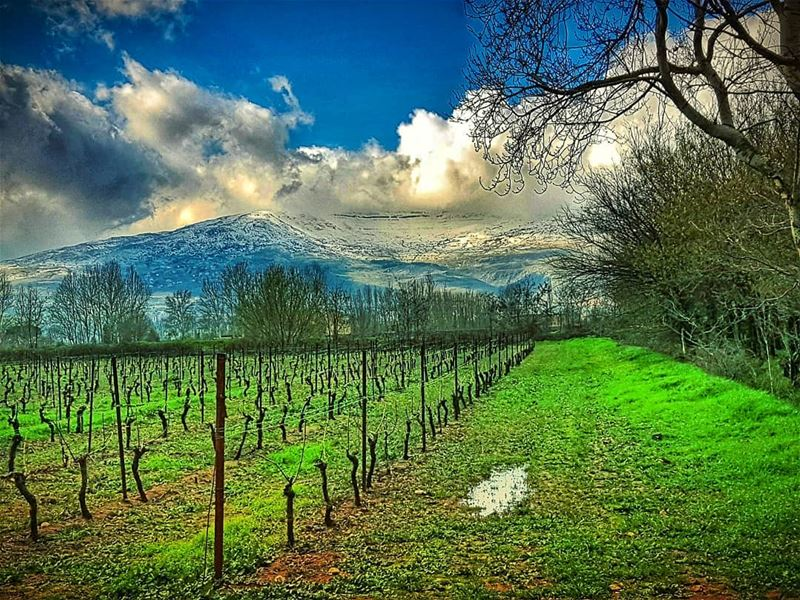 Vineyards and the mountains  bekaa  valley  livelovebekaa  mountain ... (Bekaa Valley)