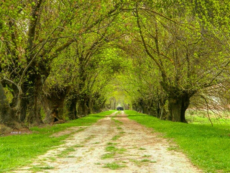 Some beautiful paths can't be discovered without being lost... (Beqaa Valley)