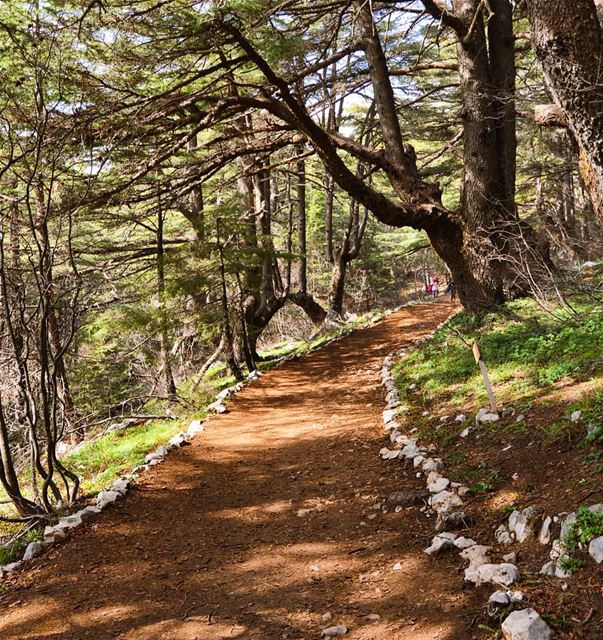 Finding peace in the forest❤🇱🇧 goodvibes  goodmorning  naturelover ... (Arz el Bâroûk)