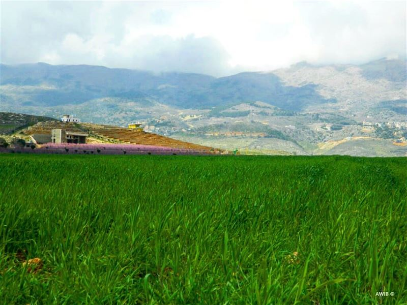 Nature always wears the colors of the spirit🌳 nature  green  good ... (Beqaa Valley)