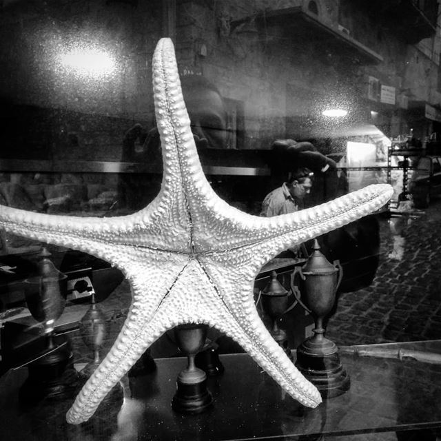 The hanging sea star -  ichalhoub in  Batroun north  Lebanon shooting with...
