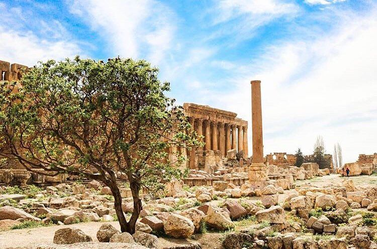 Good Morning from Baalbeck, The City of Sun! 🌻📷 @sarah_alloush ... (Baalbek, Lebanon)