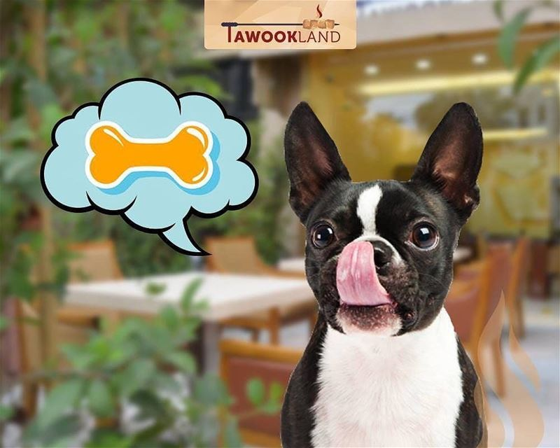 @tawookland -  Pets are ALLOWED at our outdoor terrace area! You won't... (Tawookland)