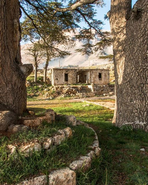 The Abandoned house between the Cedars...Al Arz - Bcharre, Lebanon......