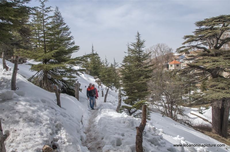 The Cedars of Lebanon - Last days of snow (Cedars of God, North Lebanon)