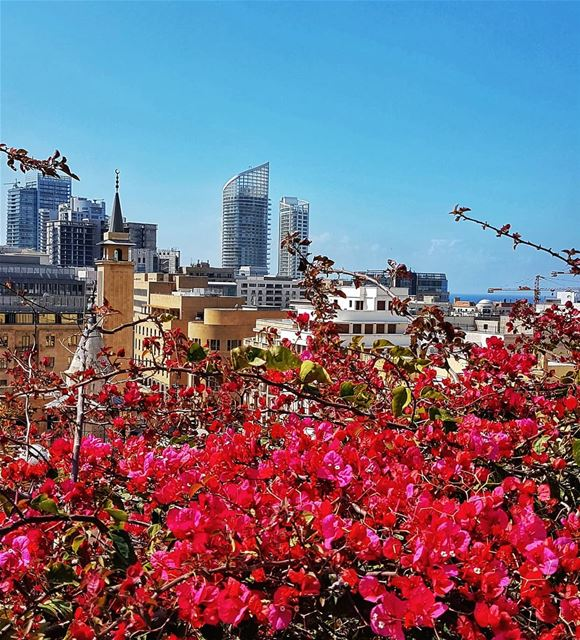 When it's spring in Beirut city  beirut  beirutcity  mycity  flower ... (Le Gray, Beirut)
