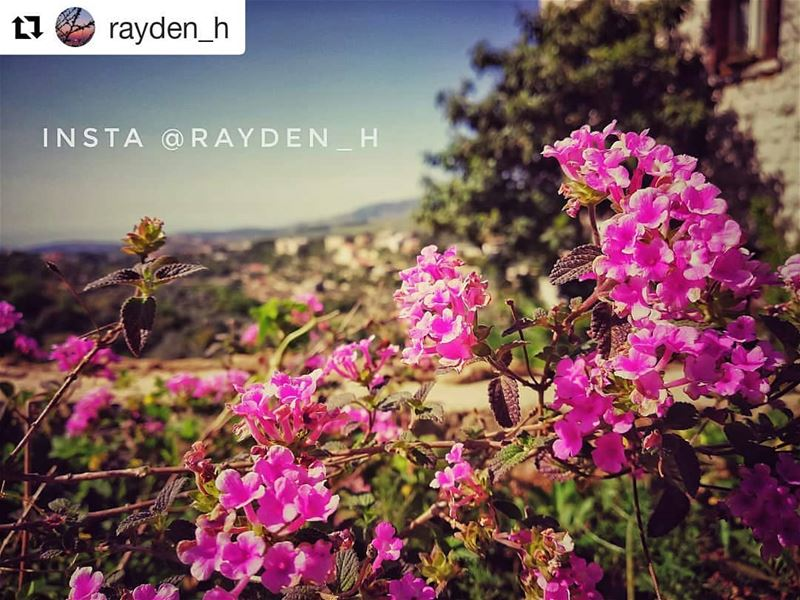 livehasbayalove Repost @rayden_h ・・・✨There is only one valuable thing in... (Baakline, Mont-Liban, Lebanon)