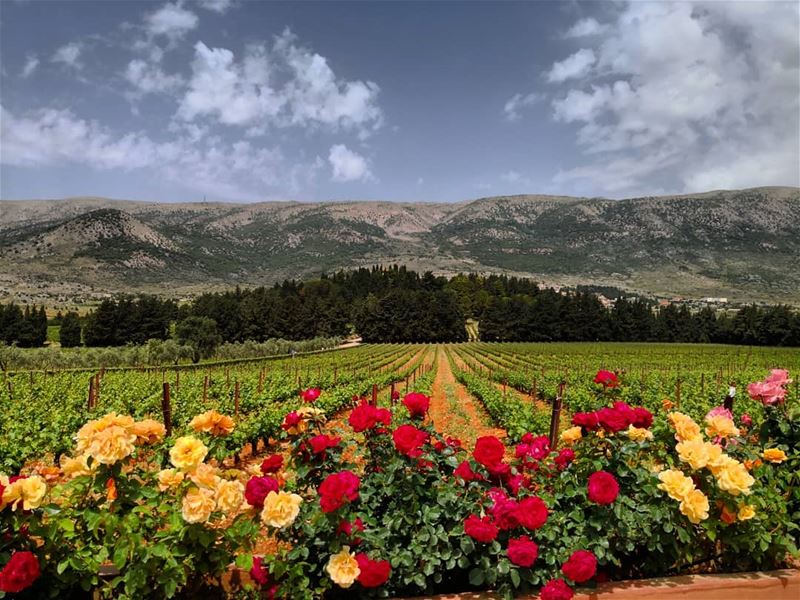 nature  lebanon  mountain  gogreen  outdoorlife  visitlebanon ...