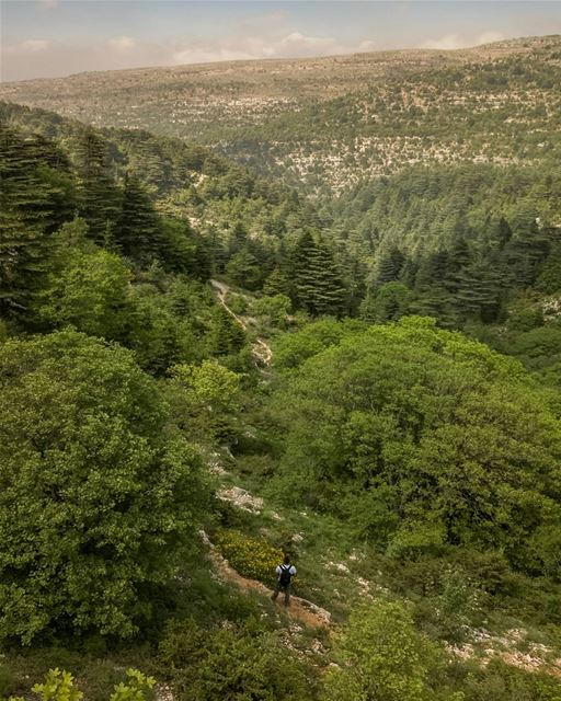 If the path before you is well marked, looks easy and clear ... most... (Horsh Ehden)