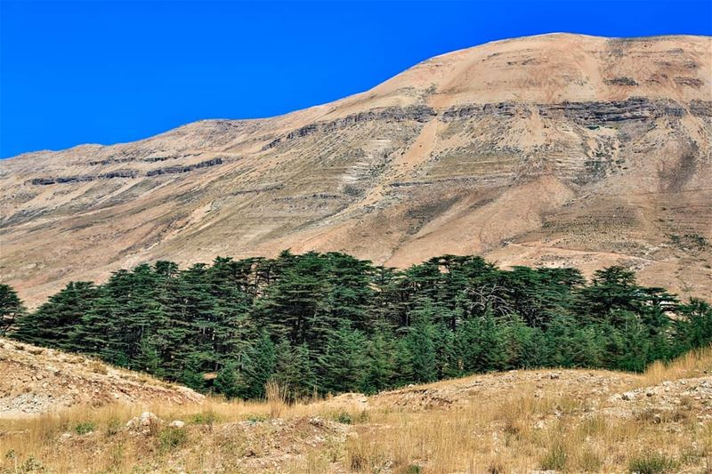 naturelover naturewonders  lebanon annaharnewspaper  lebanonisbeautiful ... (Cedars of God)