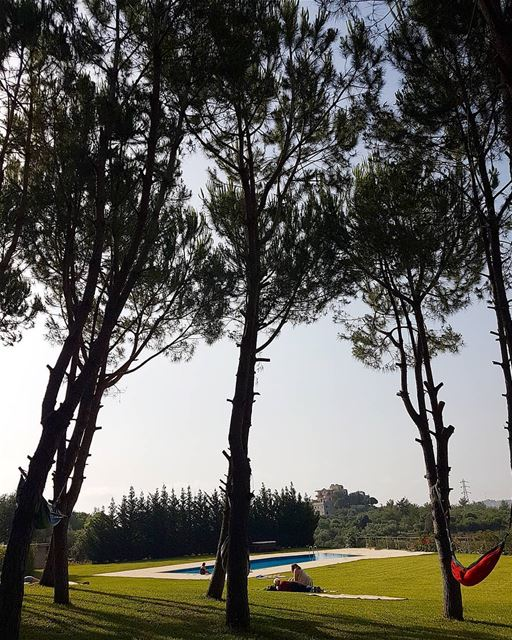 ... If you are chilling by the pool, Or resting under a pine tree,That... (Dalhoûn, Mont-Liban, Lebanon)