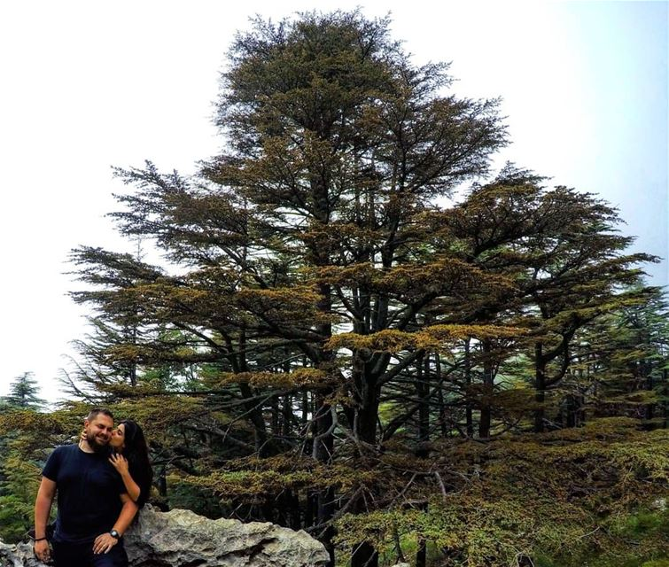 Our  Love is Strong, Pure and Everlasting like  Cedars ❤️🌲 Hiking ... (Arz Tannoûrîne)
