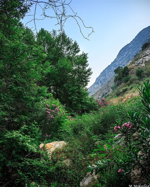Study nature, love nature, stay close to nature. It will never fail you. ©F (`Arab Salim, Al Janub, Lebanon)