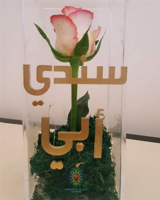 سندي أبي  PlexiGlass single rose box for  fathersday for 20$ only!Wish...