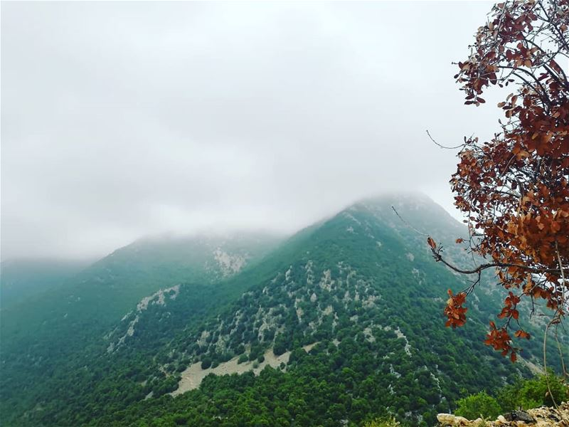 A better environment for a better tomorrow. JabalMoussa  unescomab ... (Jabal Moussa Biosphere Reserve)