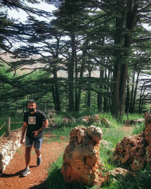The Cedars of God  Bcharre 💚  mylebanon ... livelovebeirut ... (Bcharre El Arez بشري الأرز)