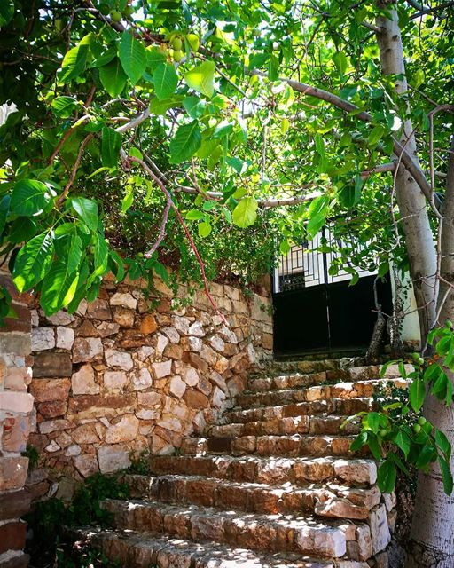 home 💜 stairs  home  bekaakafra  myvillage  myhometown  trees  joz ... (Bekaa Kafra)