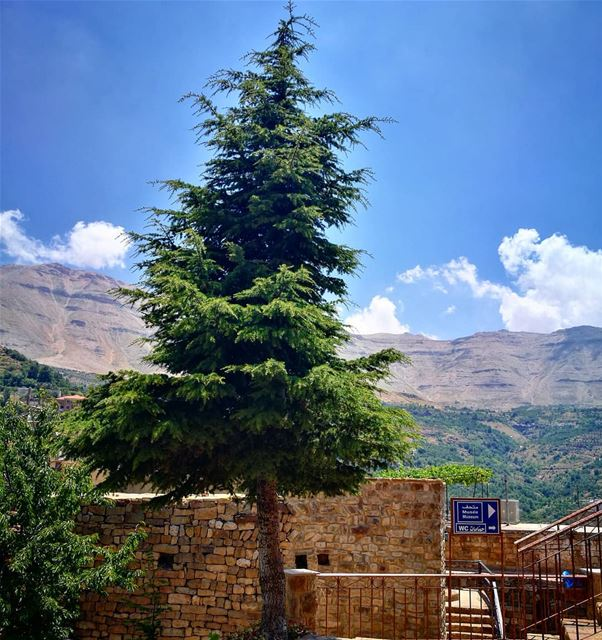 the winner stands alone  paulocoelho  quotes tree  alone  bekaakafra ... (Bekaa Kafra)