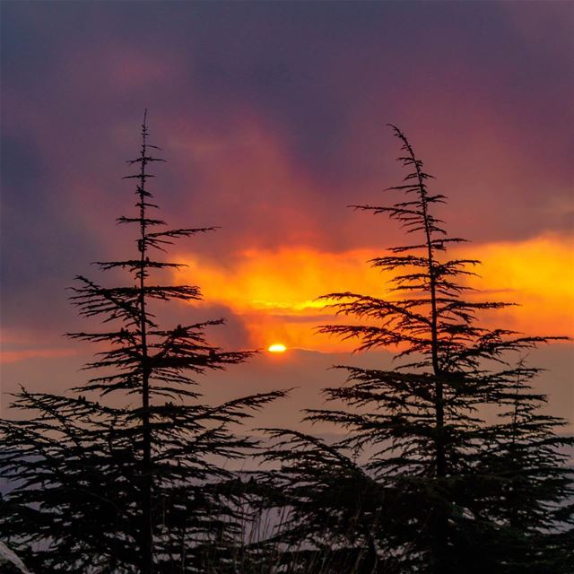 Sunset Lebanon shouf clouds sky sunshine landscape nature beautiful... (Al Shouf Cedar Nature Reserve)