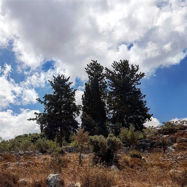 yaroun  yarounday  tree  nature  hike  sky  cloud  picoftheday  lebanon ...