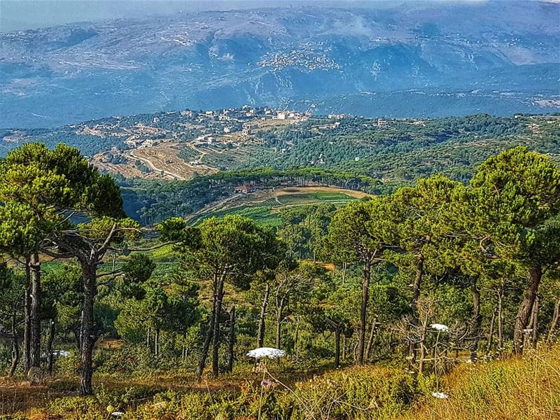 Into the valley  valley  green  landscape  mountain  ig_lebanon ... (Falougha, Mont-Liban, Lebanon)