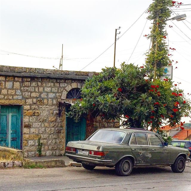 Shades of green :::::::::::::::::::::::::::::::::::::::::::::: roadside ... (Beit Meri, Mont-Liban, Lebanon)