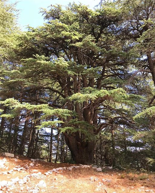 Lebanon❤️🇱🇧 I will miss you Cedar Nature Reserve 💚 positivethinking ...