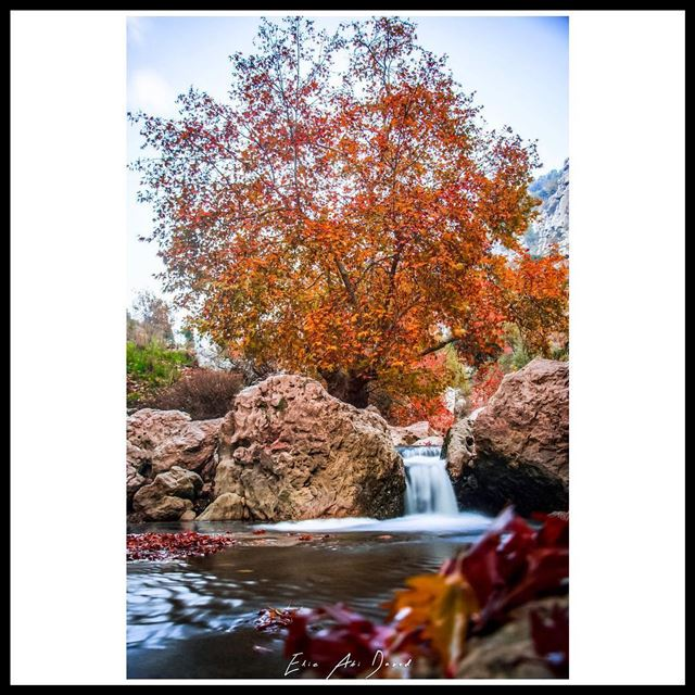 October 🍁 🍂  autumn  fall  october  river  trees  leaves  amazing ...