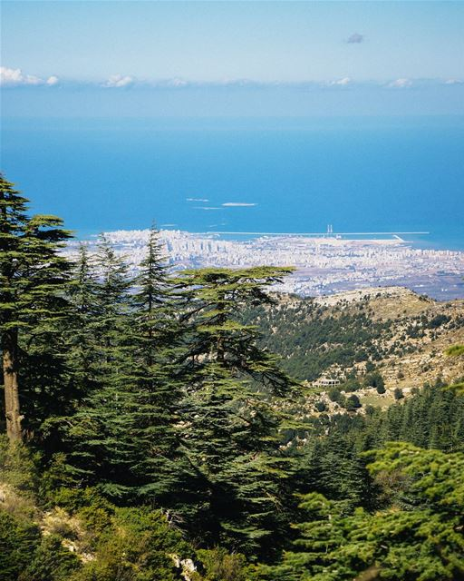 View of Tripoli and it's nearby islands (Palm island also known as Rabbit... (Horsh Ehden)