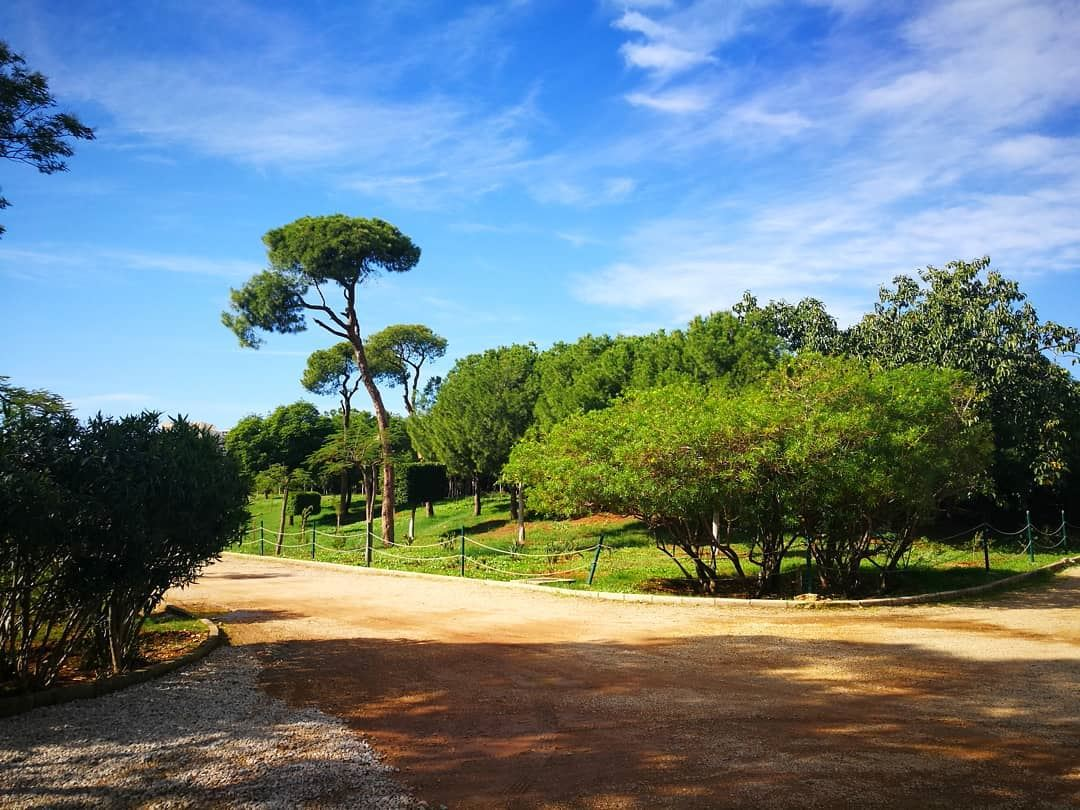 WalkIn  Beirut  Pine  Forest this morning for this beautiful scene.  Blue... (Beirut, Lebanon)