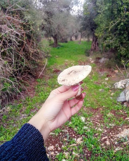 yaroun  yarounday  southlebanon  livelovesouth  natureoflebanon ...
