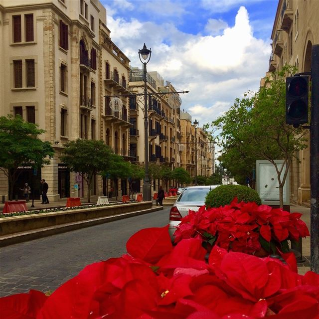 Beautiful Beirut during Christmas Time🎄Red Poinsettia everywhere❣️❣️... (Beirut, Lebanon)
