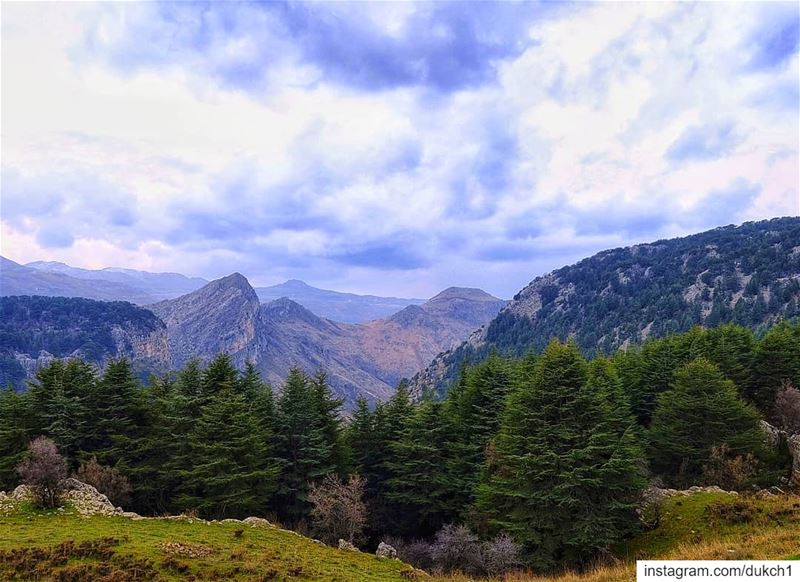 lebanon  mountains  lebanese  trail  cedar  forest  extreme  nature  wild...