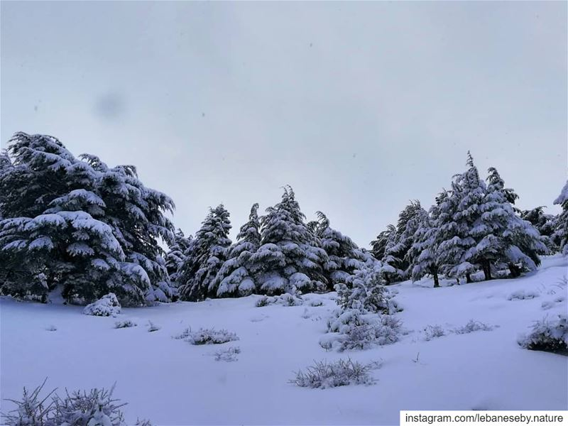 When it snows, you have 2 choices:  Shovel or make  Snow angels..... (Akkar)