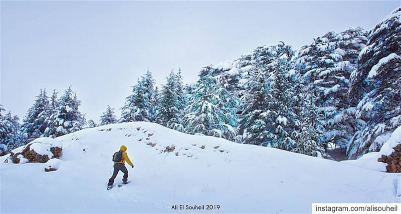 Wishing you a new year filled with new hope, new joy and new adventures .... (Bcharre El Arez بشري الأرز)