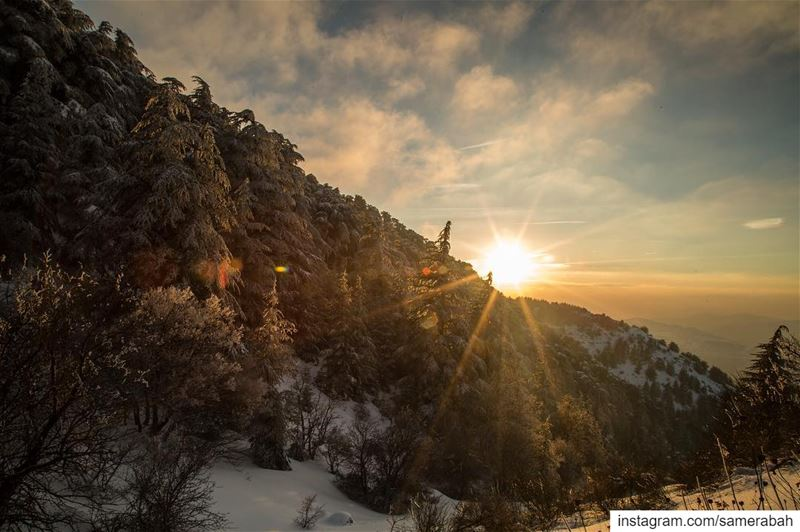 Sunset........... snow  forest  reserve  sunset  sunrays  sky ... (Al Shouf Cedar Nature Reserve)