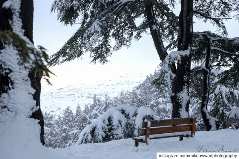 Forget the freezing temperatures and enjoy the scenery...Heaven on Earth... (Cedar Reserve Tannourine)