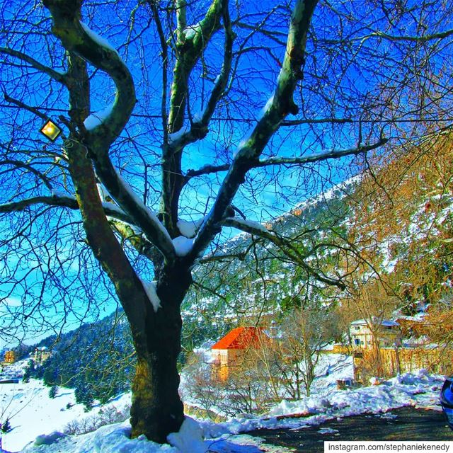 Winter Wonderland in the most beautiful village in north lebanon-Ehden ❤...