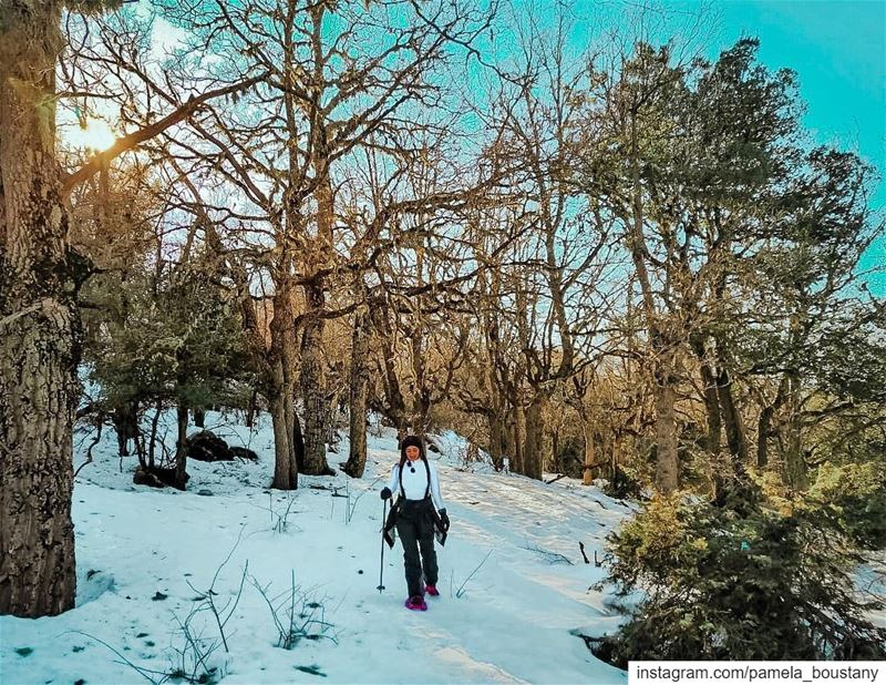 Wandering off trail yesterday was the best part of the whole experience! ❄️ (Horsh Ehden Nature Reserve)