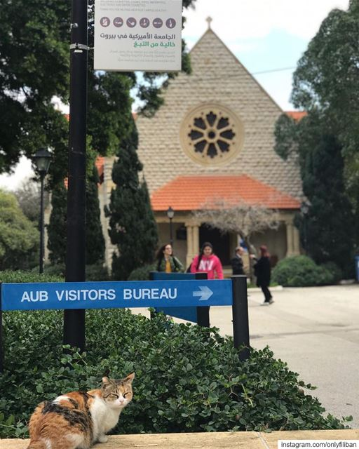 Welcome to AUB! ❤️ 🐈 @onlyfiliban📚🖊📝🏫🎓🇱🇧🇺🇸AUB (American... (American University of Beirut (AUB))